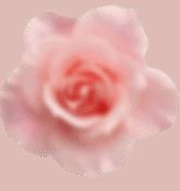 rosa-flor